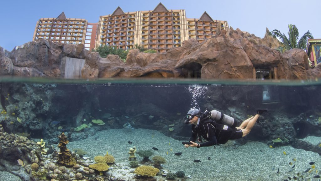 Introducing New Up Close Encounters at Rainbow Reef at Aulani Resort