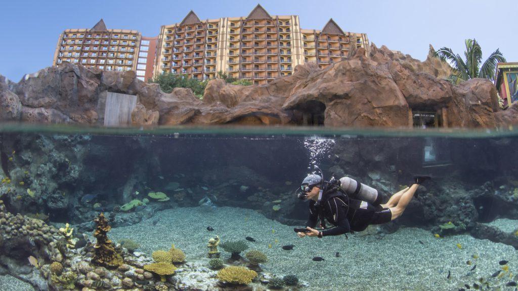 Introducing New Up Close Encounters at Rainbow Reef at Aulani Resort